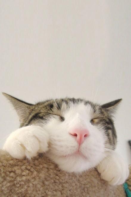 壁纸 动物 猫 猫咪 小猫 桌面 440_660 竖版 竖屏 手机