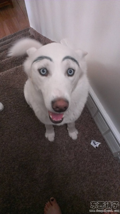 爆笑恶搞  眉毛