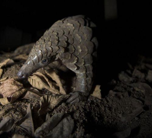 舌头吃蚂蚁和白蚁