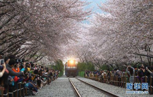 韩国镇海现开往春天的列车 引游人争相拍照