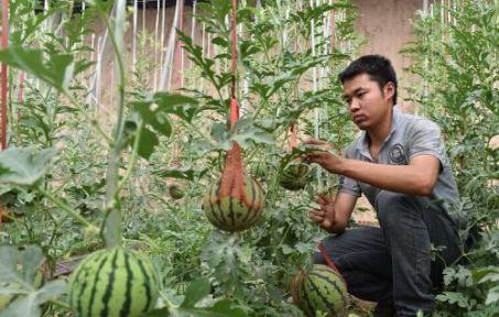 大学生耕耘农业创业梦