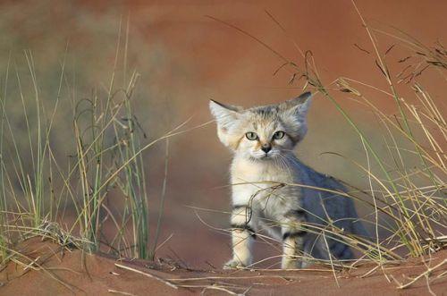 壁纸 动物 猫 猫咪 小猫 桌面 500_331