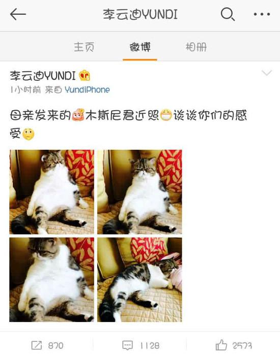 【明星爆料】李云迪与喵星人隔空互动 网友:你家猫胖成球